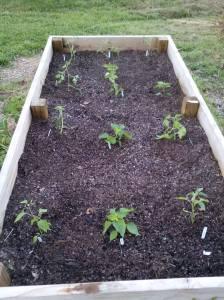 2014 Garden Bed Start